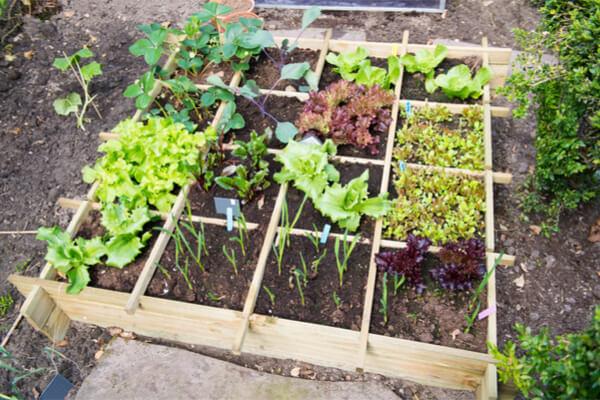 Adopter Des Plantes Adaptées à L'intérieur