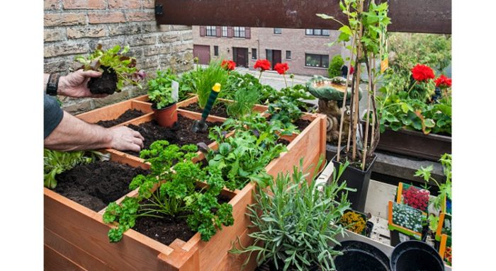 Bien Nourrir Les Plantes