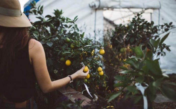 gestes essentiels pour aider la plante à pousser